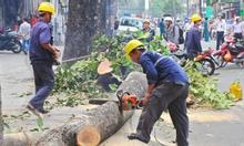Dịch vụ chặt cây, cắt tỉa, cưa cây số I_ 0904344.374