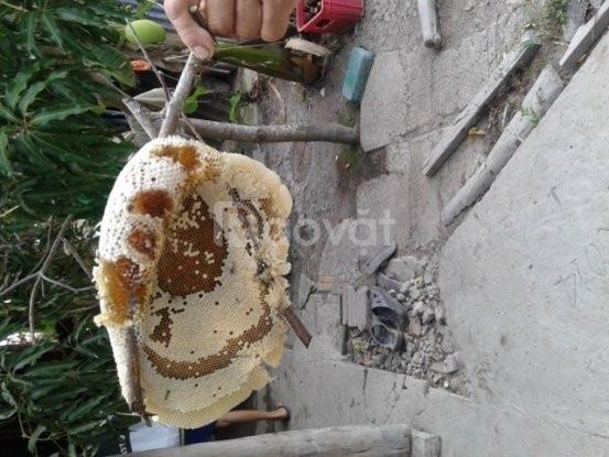 Mật ong ruồi nguyên chất