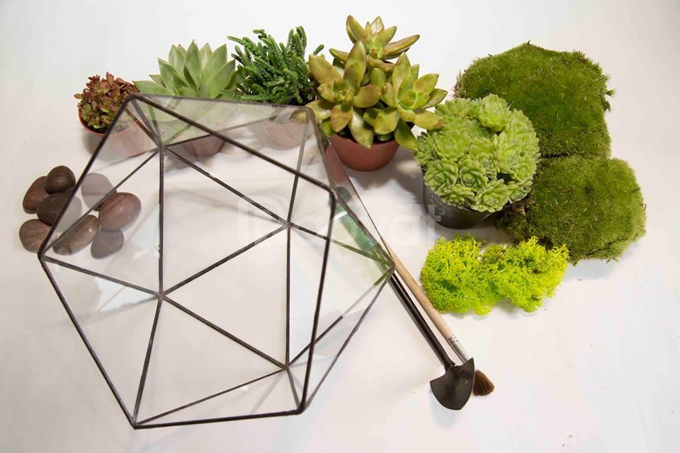 Nghệ thuật trồng cây trong thủy tinh