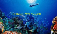 Tour 3 đảo trọn gói Nha Trang -180K-DT 0969550460