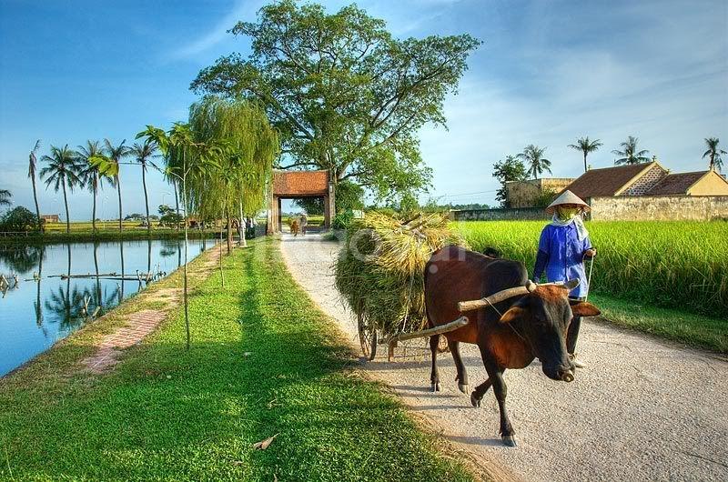 Tour du lịch Làng cổ Đường Lâm