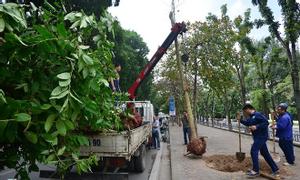 Dịch vụ cưa cây, cắt tỉa cây xanh tránh mưa bão.