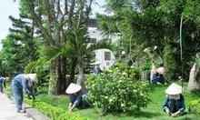 Chăm sóc cây xanh Bình Dương