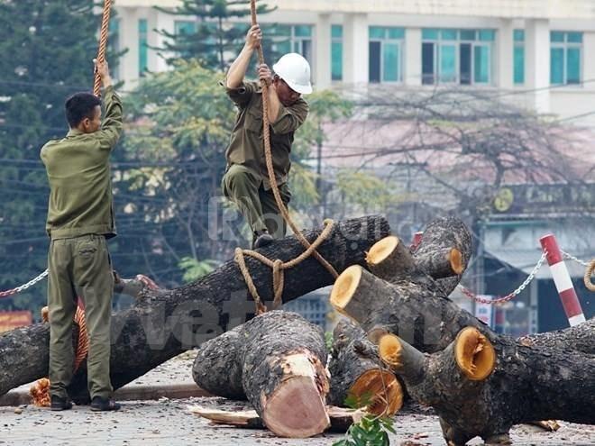 Dịch Vụ Chặt Cây, Cưa Cây Tại Hà Nội 0904344.374
