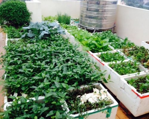 Đất thịt, giá thể trồng rau, trồng cây