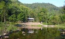 Cho thuê xe đi khám phá rừng nguyên sinh Khe Rỗ