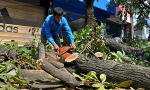 Dịch vụ chặt cây, cưa cây xanh tại Hà Nội