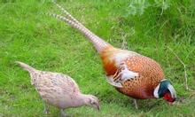 www.trangtraithuyphuong.combán chim trĩ
