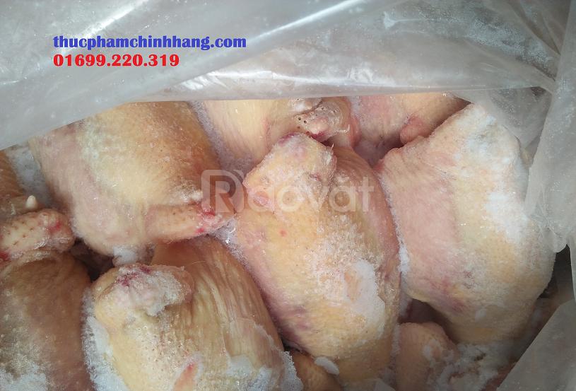 Đại lý bán gà đông lạnh tại Hà Nội