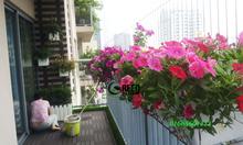 Thiết kế ban công chung cư, trang trí giàn hoa ban công