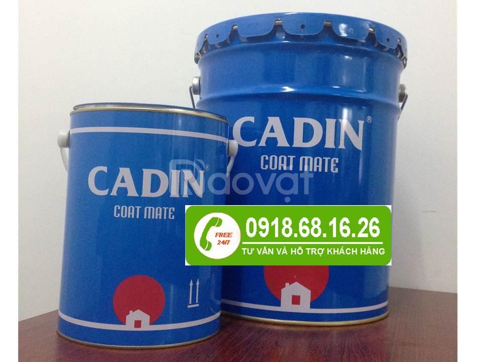 Mua sơn dầu CADIN màu vàng giá rẻ nhất
