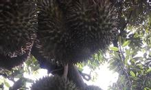Vựa trái cây - nông sản sạch Đắk Lắk Kim Ngân