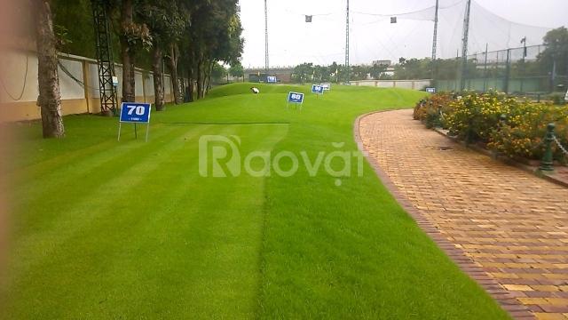Thanh lý cỏ nhân tạo sân golf, cỏ golf nhân tạo thanh lý