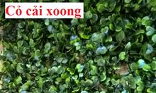 Mua tấm cỏ nhựa treo tường, miếng cỏ nhựa tường giá rẻ tại Quảng Ninh