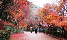 Tour Du Lịch Nhật Bản 6N5Đ trọn gói giá rẻ