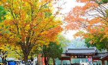 Tour du lịch mùa thu Hàn Quốc 5N4Đ tháng 10