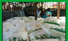 Bao PP đựng 10kg 20kg 25kg 50kg - đựng bột mì , gạo , cà phê