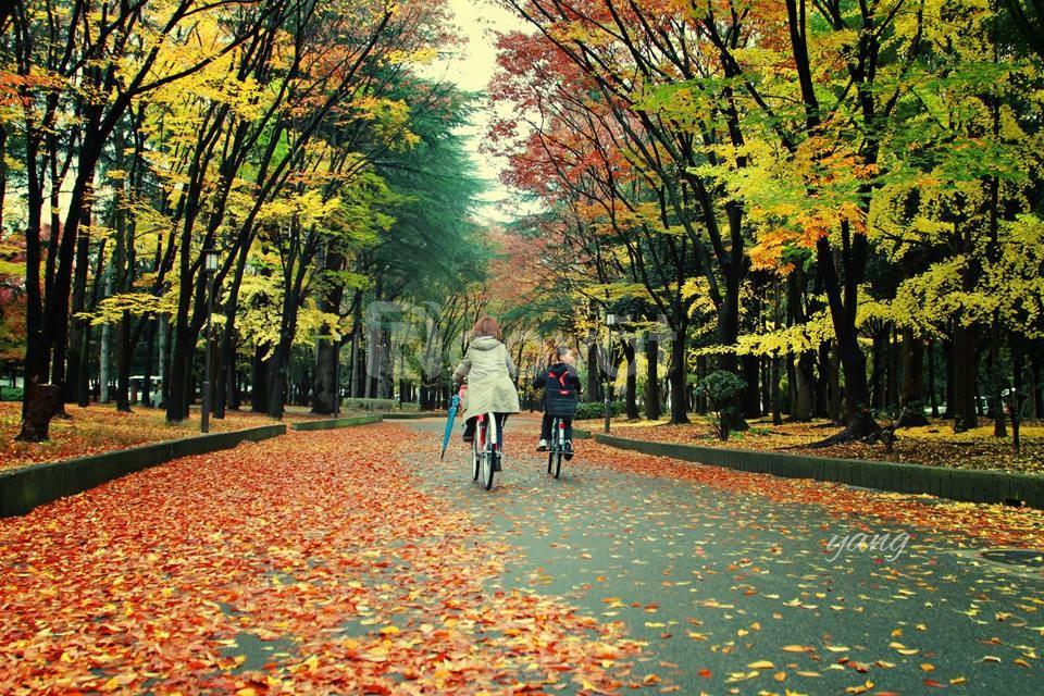 Tour Nhật Bản 6 ngày giá rẻ