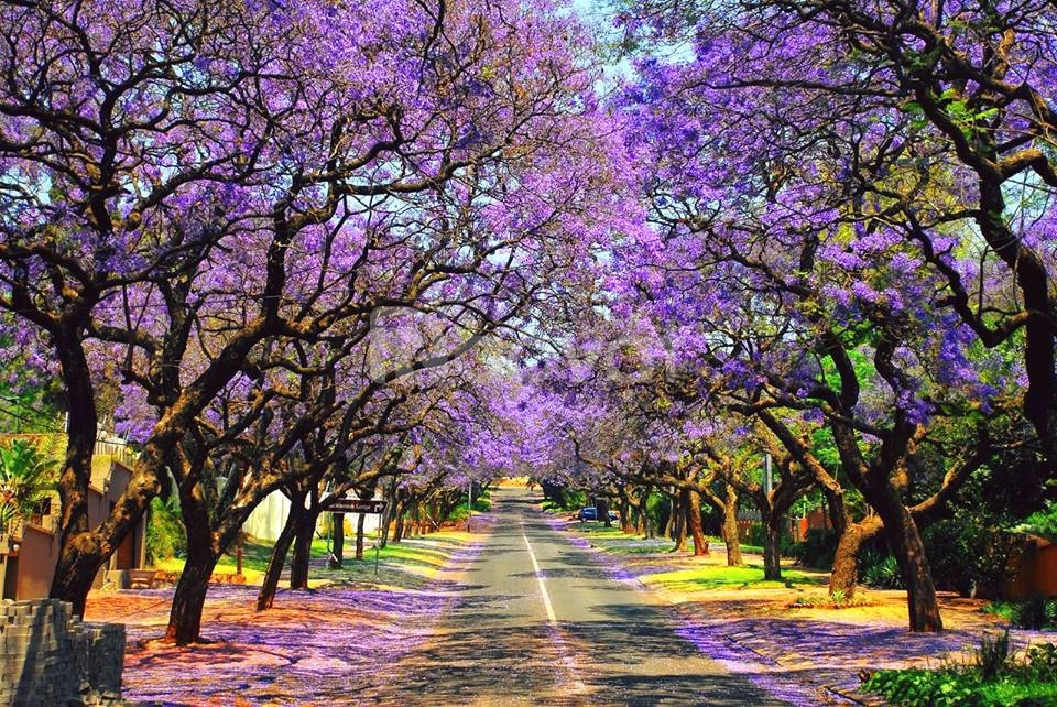 Tour Thiên đường Nam Phi 8 ngày trọn gói giá rẻ