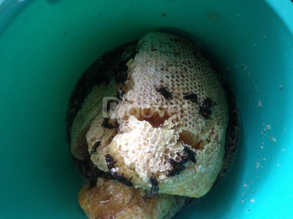 Mật ong ruồi rừng thiên nhiên