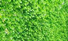Tấm cỏ nhựa trang trí ban công, cỏ nhựa trải sàn ban công tại Hà Nội