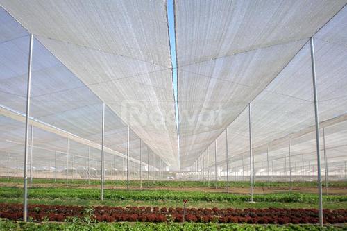 Lưới chắn sâu bọ, cách làm nhà lưới trồng rau, lưới chắn côn trùng