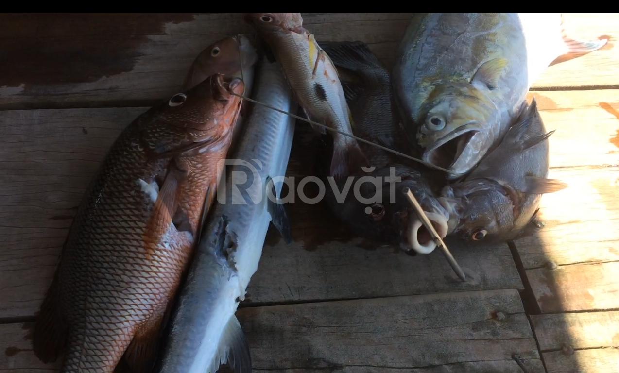 Tour bắn cá kết hợp câu cá và lặn nổi tại Nha Trang