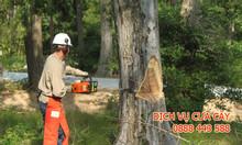 Dịch vụ cưa cây, tỉa cắt hạ cây xanh tại Hà Nội