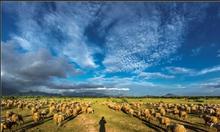 Bảng giá dê cừu