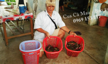 Cua biển Cà Mau chính gốc - Cua bán ra bao ăn, không buộc thêm dây