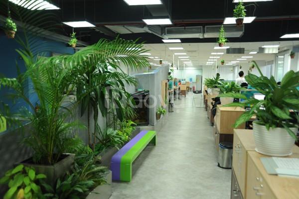 Cho thuê cây xanh cây cảnh, nội thất