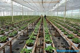 Màng kính Israel, màng nhà kính nuôi tôm, màng kính trồng rau, màng kí