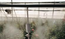 Vòi phun sương, hệ thống tưới phun sương, tưới phun sương tự động