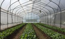 Nhà kính trồng rau, màng kính nhập khẩu, màng nhà kính, màng kính Isra