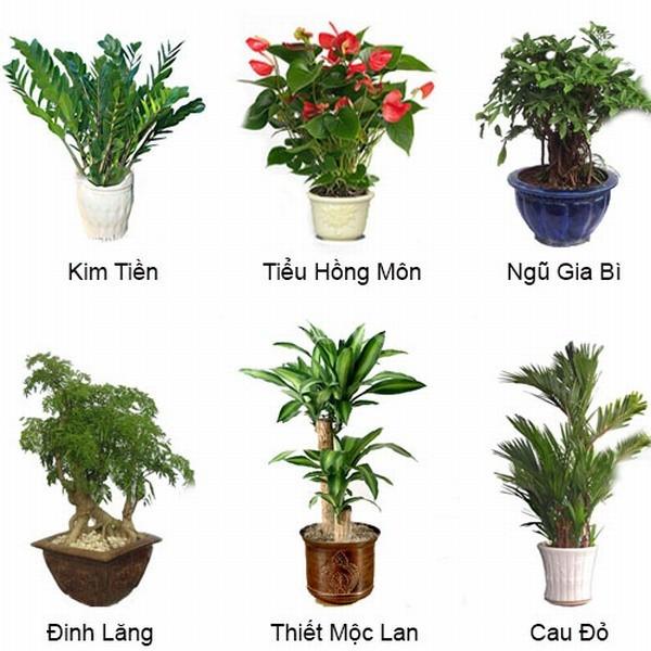 Cho thuê cây xanh cây cảnh cây nội thất của cây xanh Tuấn Hùng