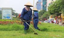 Dịch vụ cắt cỏ giá rẻ