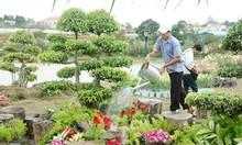 Dịch vụ cây xanh cây cảnh của Tuấn Hùng