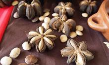 Hạt Sachi Đắk Lắk nguyên chất 100%