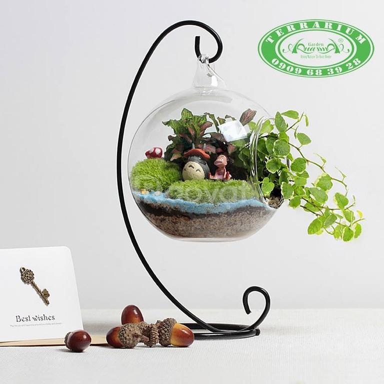 Tiểu Cảnh Mini Để Bàn Cùng Terrarium AquaGarden.