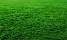 Bán Cỏ Nhật, cỏ nhung  phục vụ trang trí sân vườn, công viên, công ty