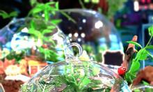 Tiểu cảnh mini để bàn cùng Terrarium AquaGarden