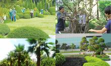 Dịch vụ thiết kế cảnh quan sân vườn