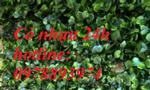Tấm cỏ nhựa trang trí, cỏ nhựa treo tường