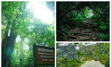 Trải nghiệm rừng Quốc Gia Cúc Phương với giá hấp dẫn