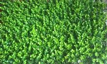 Tấm cỏ nhựa treo tường, thảm cỏ nhựa dán tường, tấm cỏ nhựa trang trí tường