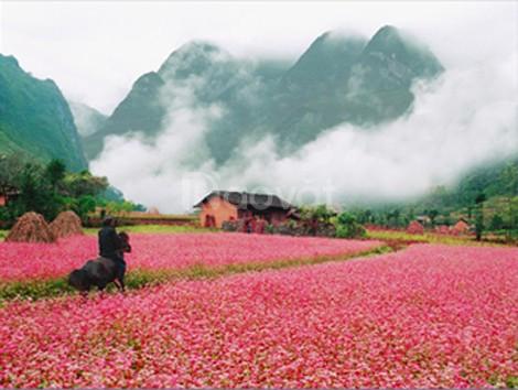 Tết Hà Giang - Khám phá và trải nghiệm