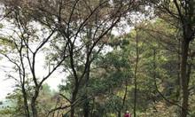 Tour dã ngoại trải nghiệm My Hill Sóc Sơn dành cho bé