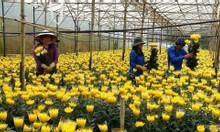 Tuyển gấp nam nữ trồng hoa Đà Lạt (lương 7 triệu bao ăn ở)
