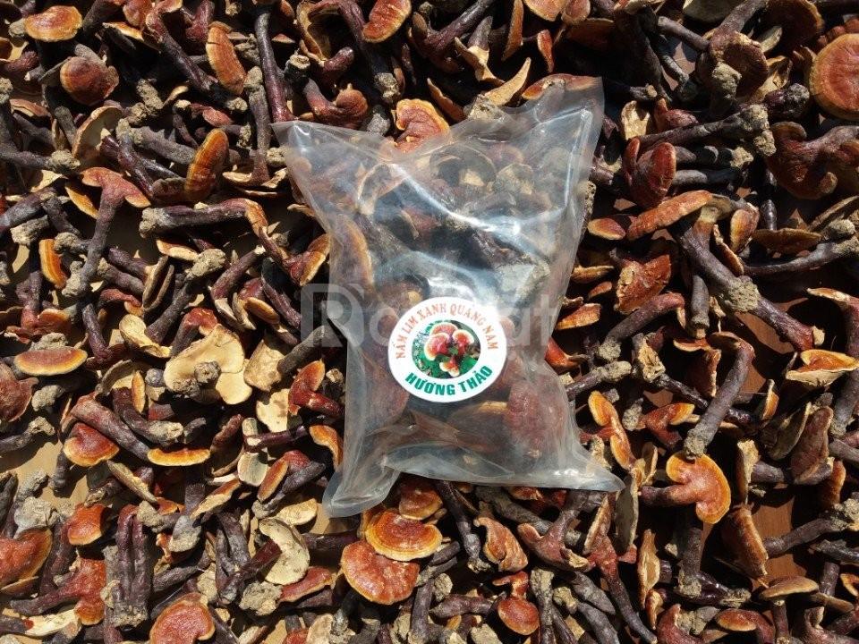 Nấm lim xanh Quảng Nam chính hiệu hương thảo
