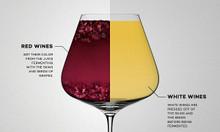 Rượu vang đỏ và sự khác biệt thú vị với rượu vang trắng